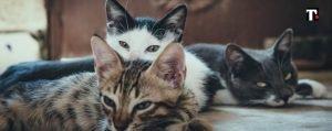 gatti scomparsi parma