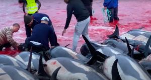 Uomini uccidono un delfino